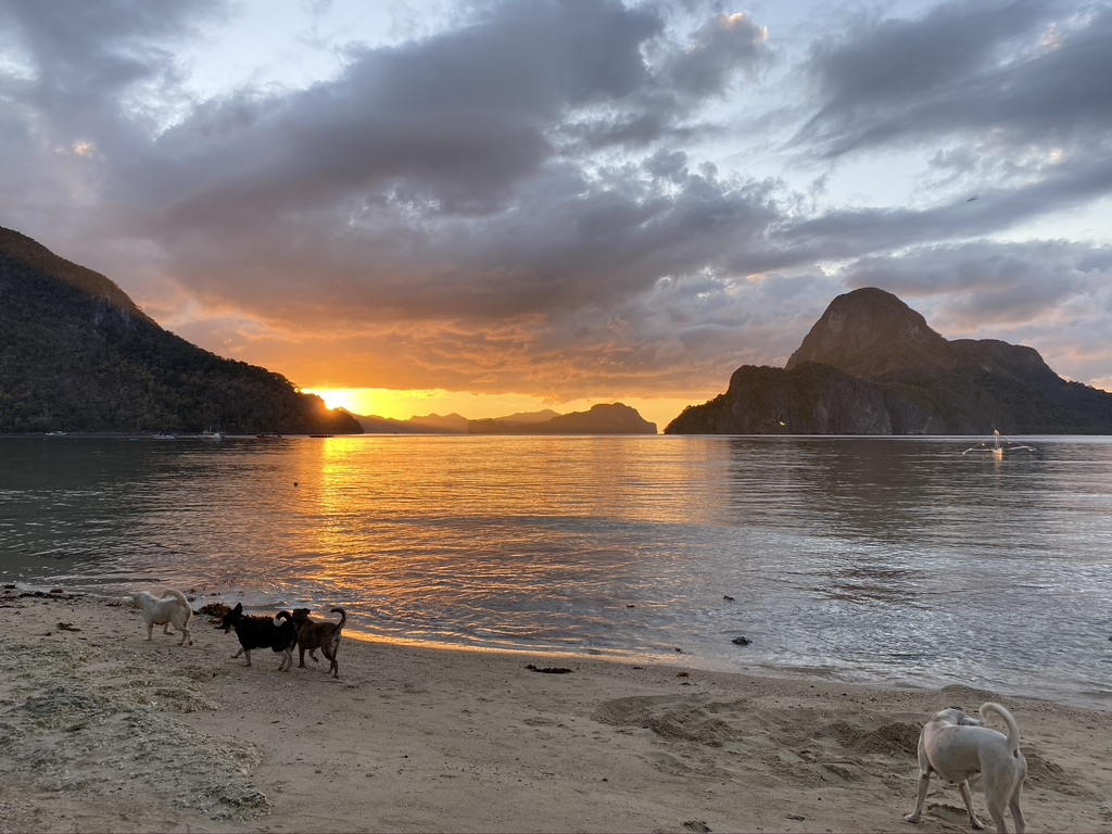 Street dogs in the Philippines, Sunset in El Nido