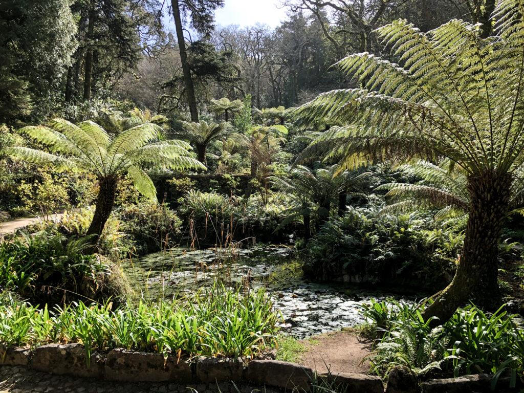 Jardin du palais de Pena - Sintra